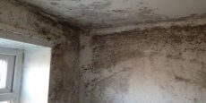 Ceiling mold