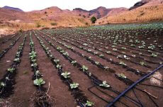 growing vegetables during a drought