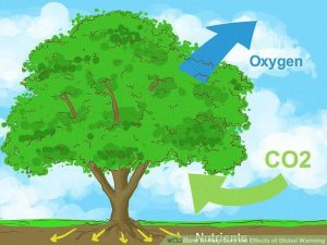 oxygen and co2 effect on global warming and climate change