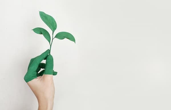 A hand holding a green plant